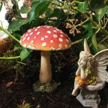 one toadstool one fairy seated
