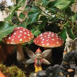 two toadstools two fairies